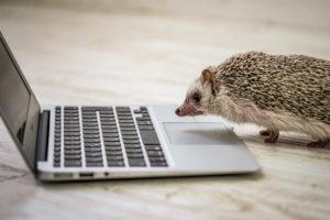 MacBookAirに向かうハリネズミ